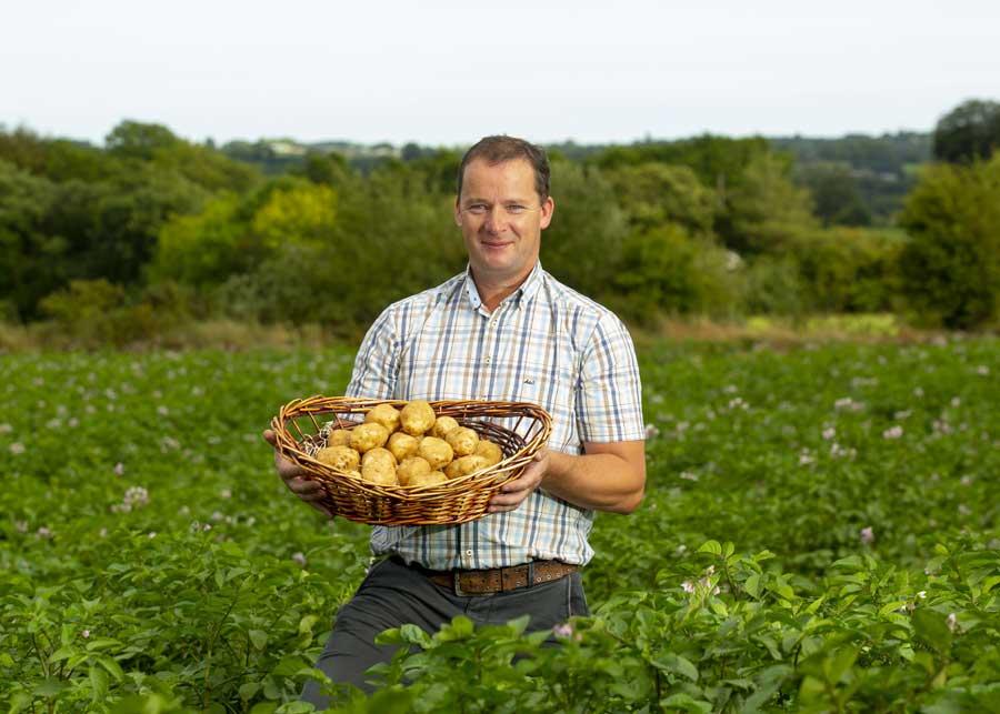 Whelan Potatoes
