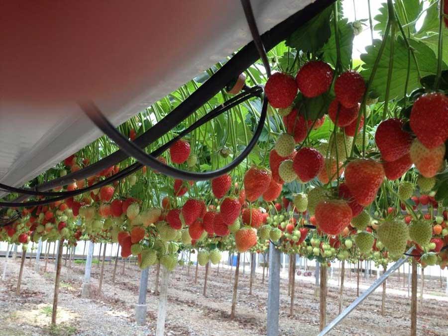 Wheelock Fruits